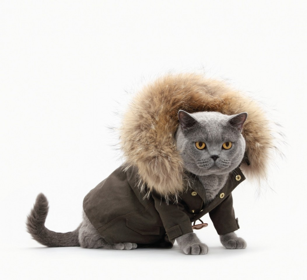 HOW TO KEEP YOUR PETS WARM IN WINTER