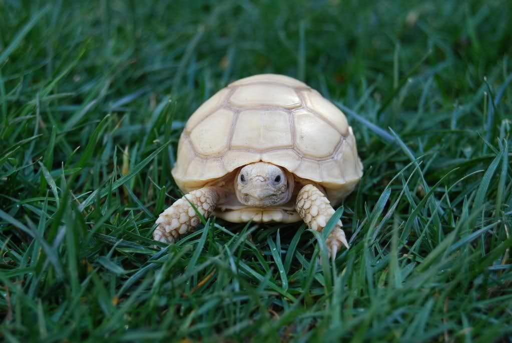 Considerations when Purchasing a Tortoise