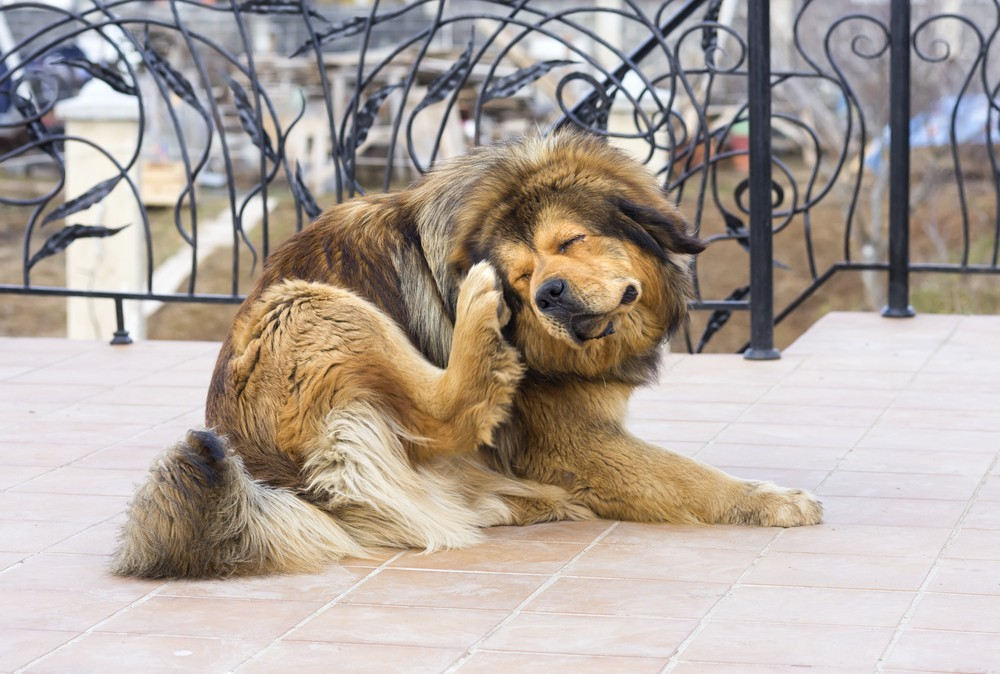 The scourge of fleas: Take the itch out of your pet's scratching
