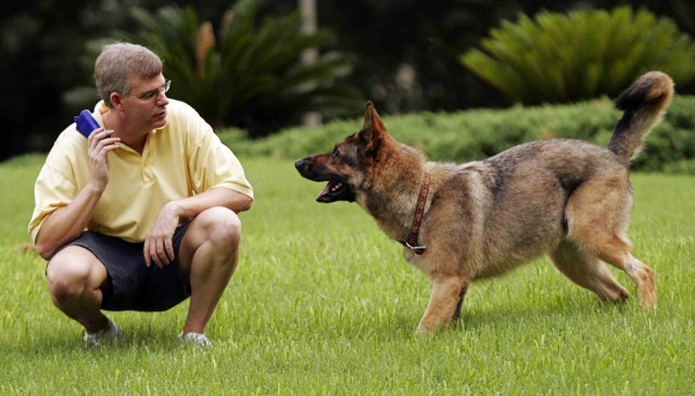 Man's Best Friend: how owning a dog is good for us and society