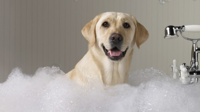 What does a dog need for a bath?