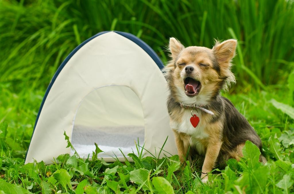 Homemade Decor: A Cozy Tent for Your Pet