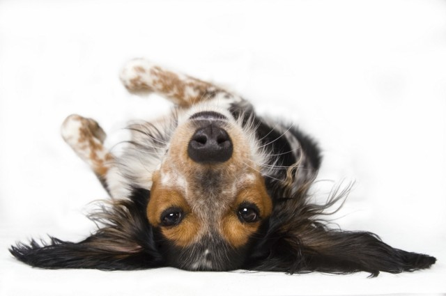 Carpet Cleaning Solutions For Pet Stains and Odor