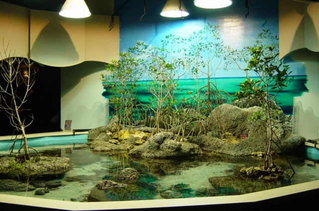 No Fishing Inside: Get an Aquarium to Make Your Home a Truly Fascinating Place