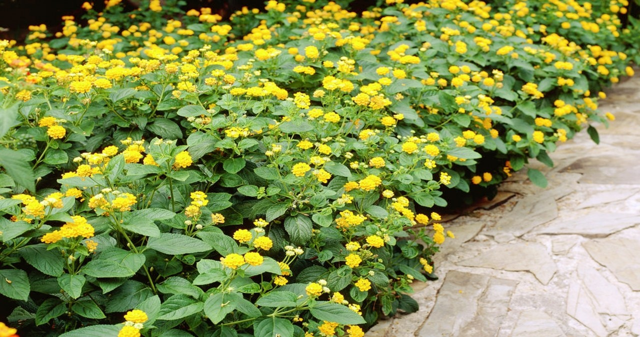 5 Great Landscaping Plant Ideas