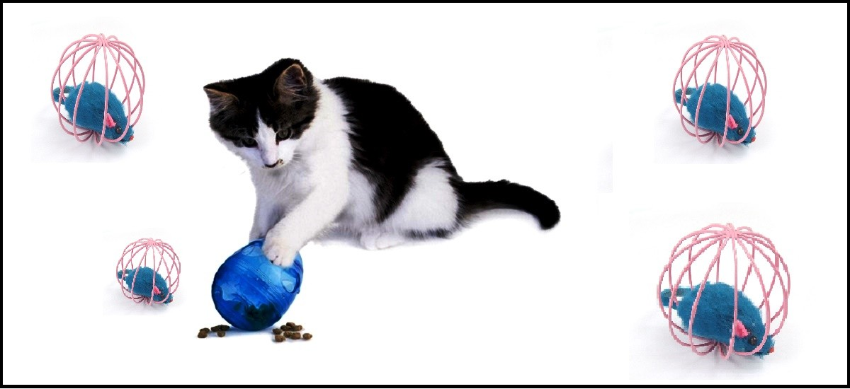 Toys Your Cat Will Love Playing With