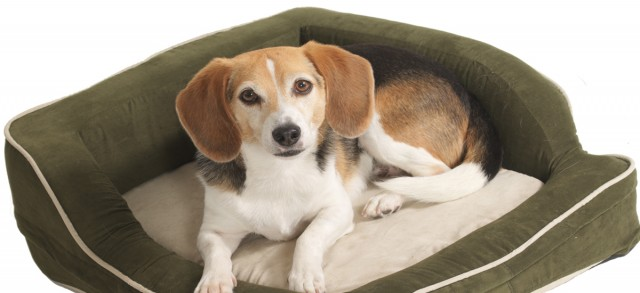 Choosing a Dog Bed- Different Types of Pet Beds