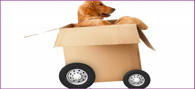 Practical Ways of Moving your Pets with Ease and Ensuring their Comfort