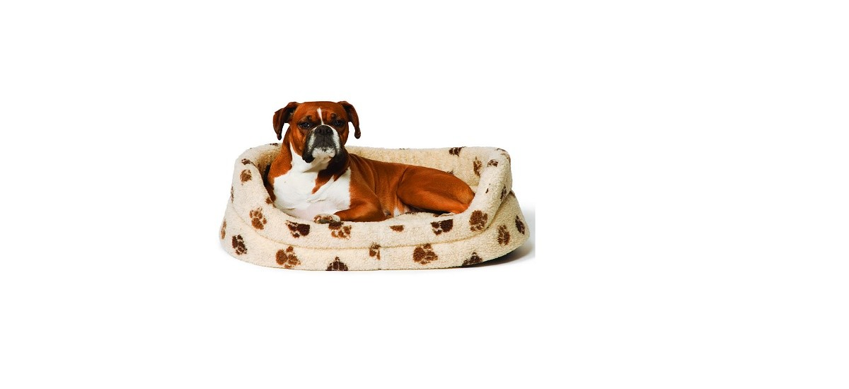 Why You Should Get Your Dog a Raised Bed